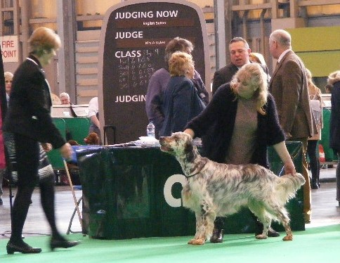 romeo_in_ring_Crufts_2016_13